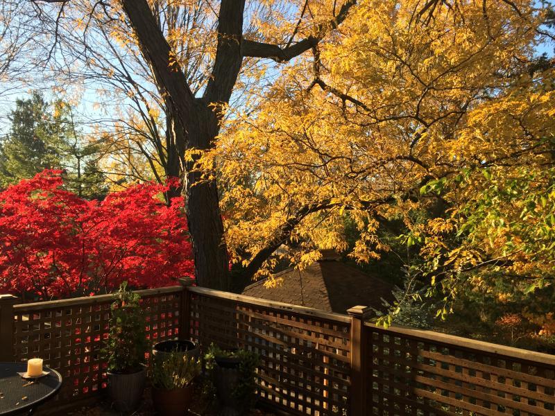Balcony Autumn
